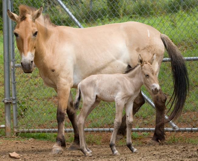 Horse Foal Dies at National Zoo Facility in Va.