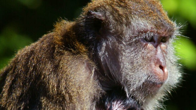 Monkey Business Lands Pet in New Home