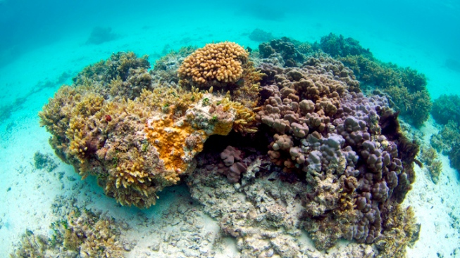 'Horrendous' Coral-Bleaching Crisis Spreads Worldwide