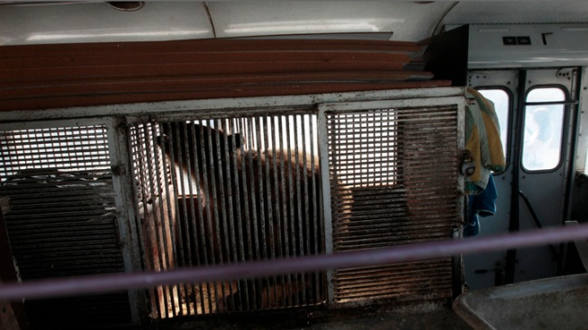 Russian Bear that Performed in Olympics Now Caged on Rusty Bus