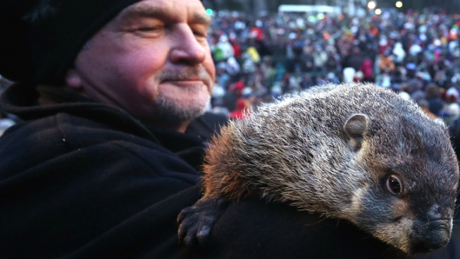 "Punxsutawney Phil ""Indicted"" Over Early Spring Forecast"