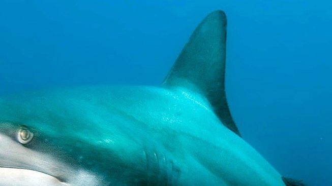 Wheelchair-Bound Teen Catches 250-pound Shark Off Florida Coast