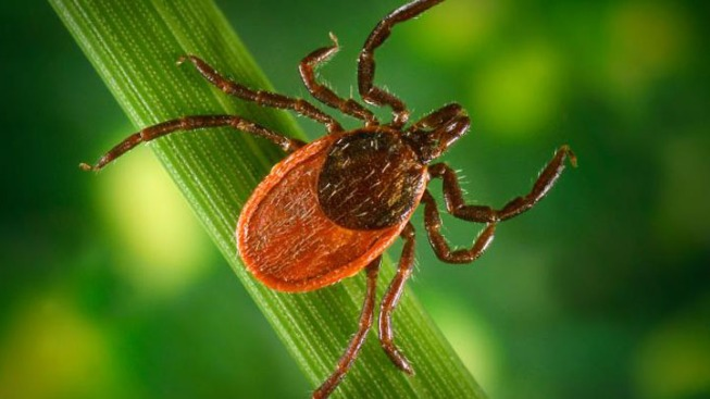 Virginians Seeing Increase In Ticks This Year
