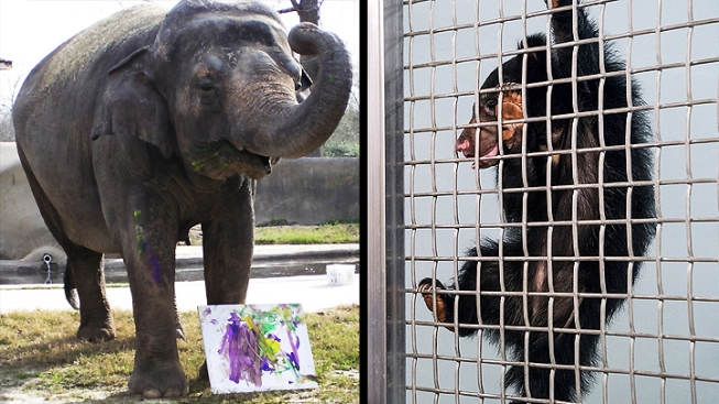 Zoo News: New Elephant Moving In; Sloth Bear Cub Named