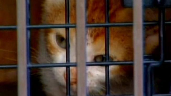 Shelter Euthanizes 80 Cats After Virus Spreads