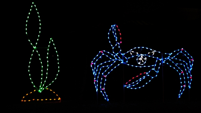 12 Days of ZooLights: Crab