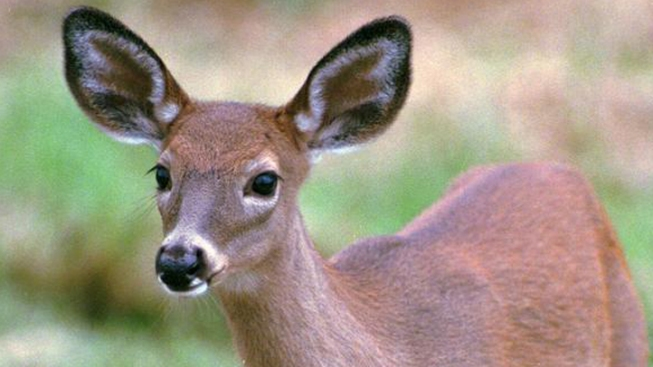 Virginia's Ban on Feeding Deer
