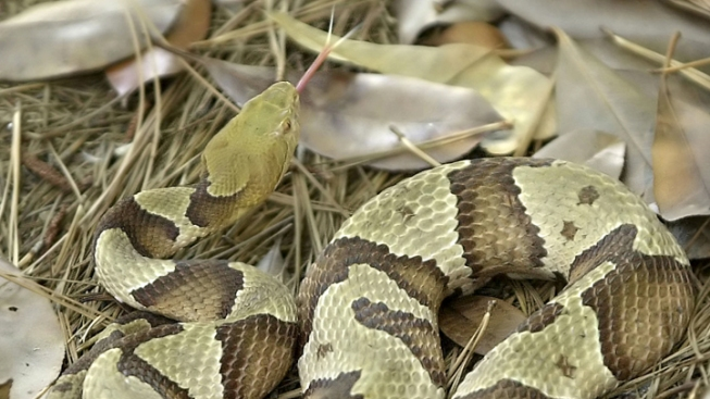 Man Bit by Snake on Potomac