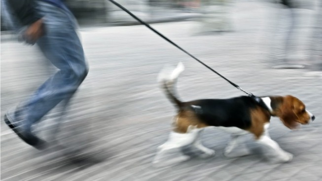 Alexandria Reverses Ruling on Electronic Dog Collars