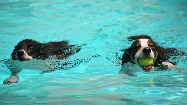 DC Dogs Invited to Pool Party