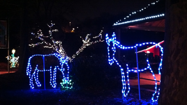 12 Days of ZooLights: Donkey