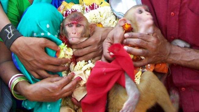 Cigarette-Smoking Monkey Weds Fellow Primate