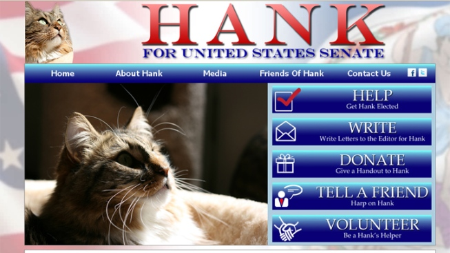 Hank the Cat Running for Senate