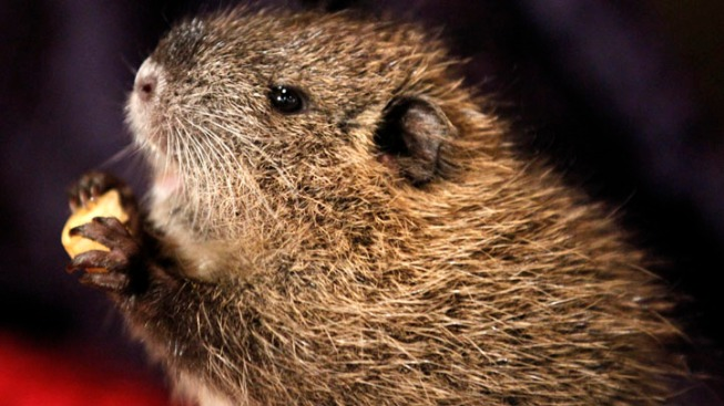 Campaign to Drive Out the Nutria
