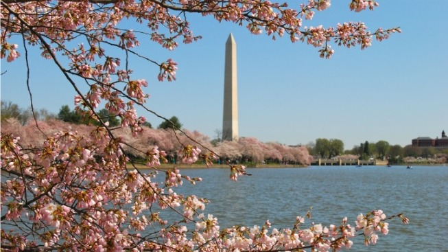 2012 Cherry Blossom Festival Kicks Off