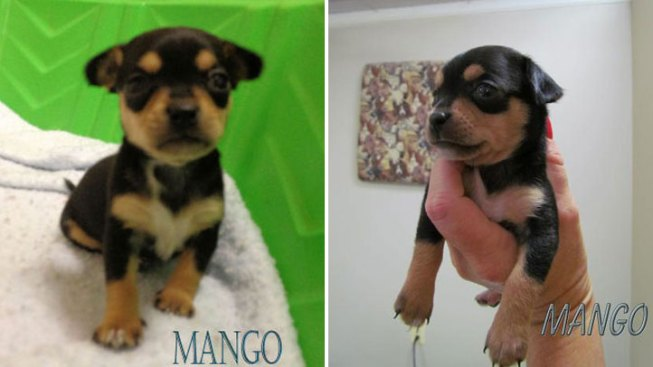 Puppy Stolen From Maryland Rescue Group