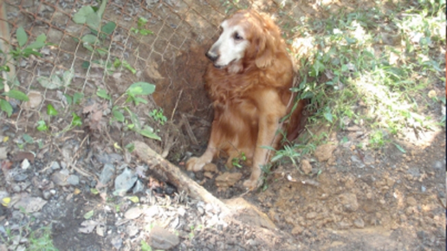 Dog Freed From Sink Hole