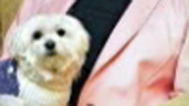$12M Dog: Leona Helmsley's Beloved Pooch Dies