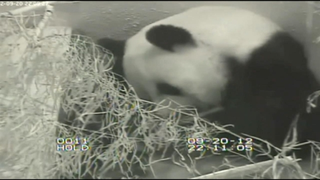 We are learning more about what may have caused a baby panda cub at the National Zoo to die over the weekend. News4's Darcy Spencer reports.