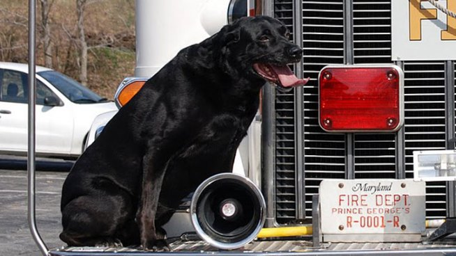 Celebrated Arson Dog Dies After Long Career