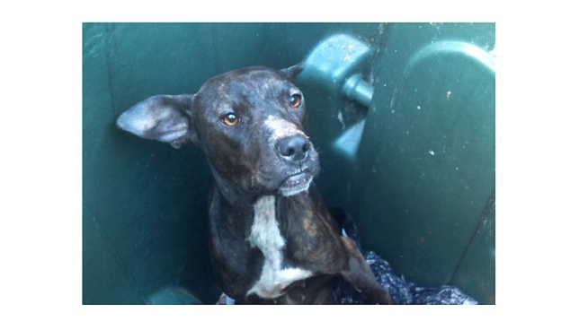Dogs Dumped in DC Trash Bin; Reward Offered