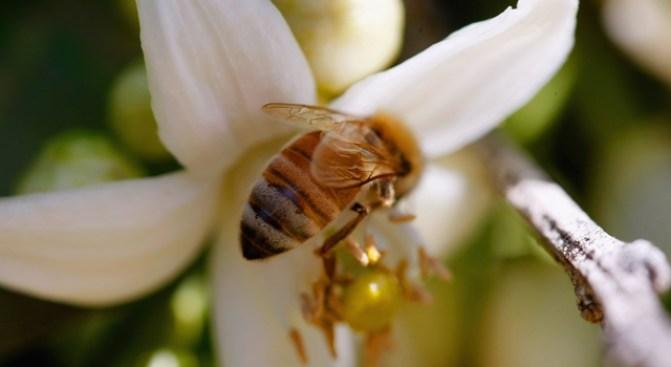 Honeybees Teach DC Students About Beekeeping