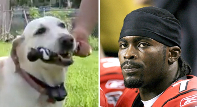 michael vick chew toy in the jaws of justice nbc4 washington