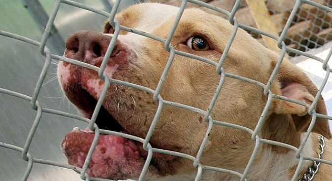 Puppies Seized From Home in Alleged Dogfighting Case