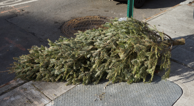 How to Recycle Your Christmas Tree in DC, Md. and Va.
