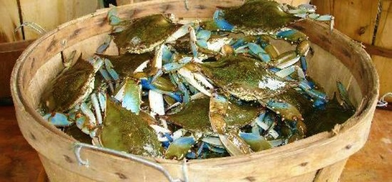 Crabbers: Worst Maryland Crab Season in 20 Years