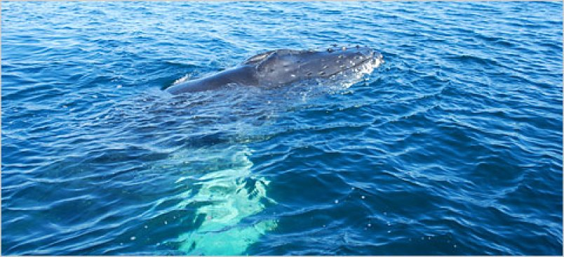 Humpback Whale Stranded on Virginia's Eastern Shore to Be Euthanized