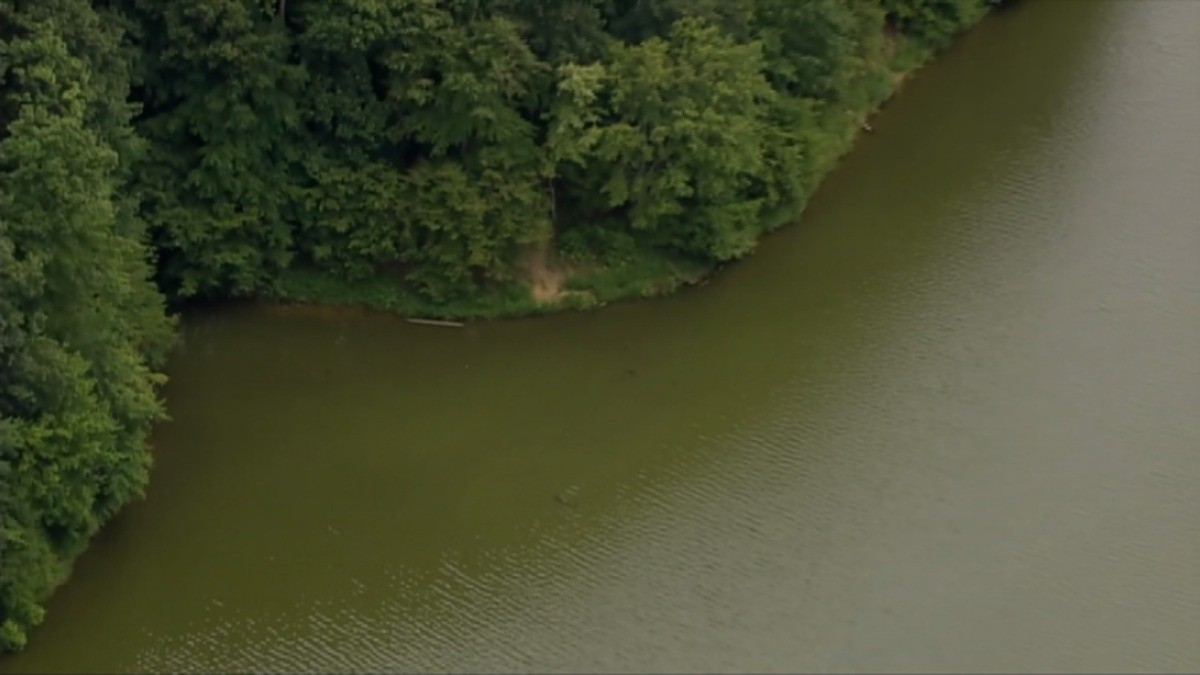 Algae Toxin That Can Kill Dogs Found in Montgomery Co. Lakes