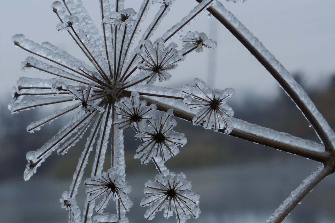 Freeze Warning Saturday Night as Temperatures Plummet | NBC Washington