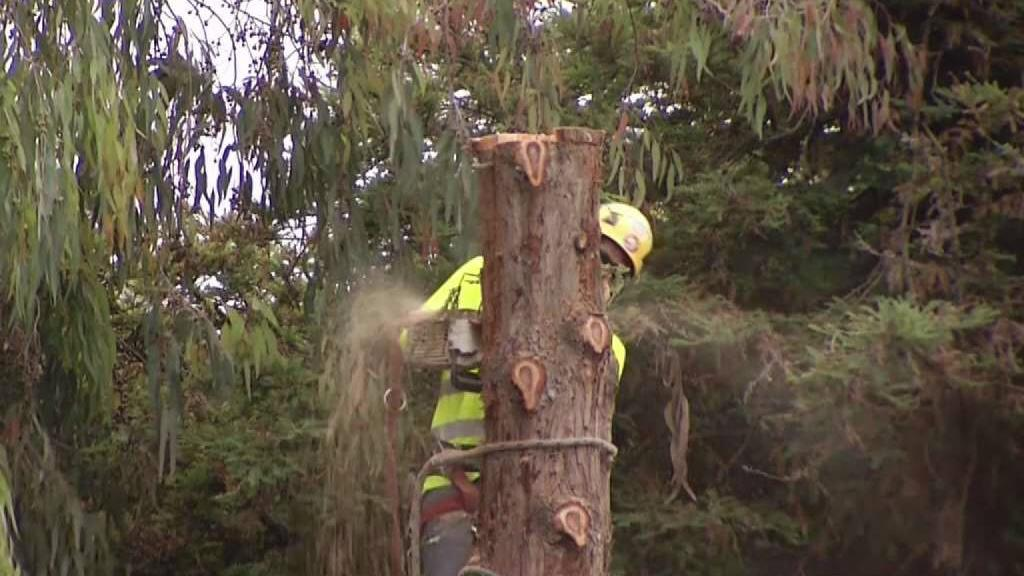 What to Know Before Hiring a Tree Cutter
