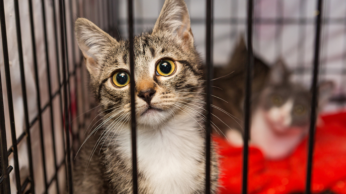 Humane Rescue Alliance Waives Adoption Fees for Many Cats